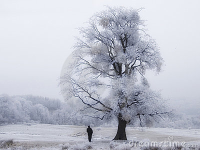 Frozen Tree With Man
