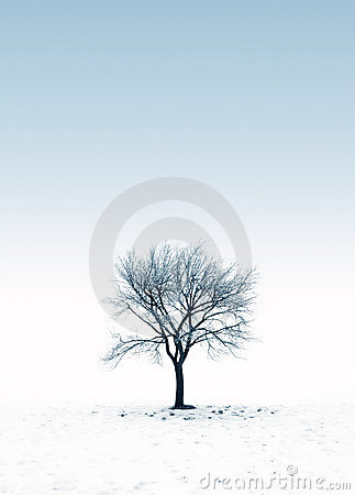 Free Frozen Tree On A Snowy Day Royalty Free Stock Photography - 11052237