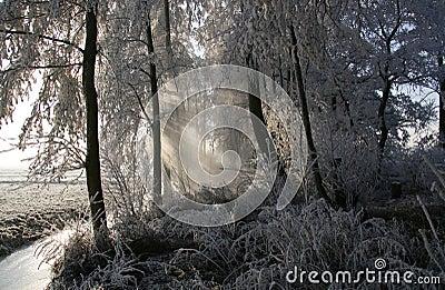 Frozen trees 2