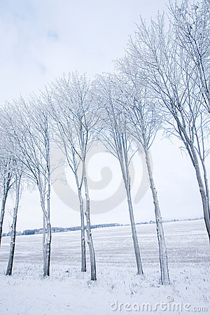 Frozen trees