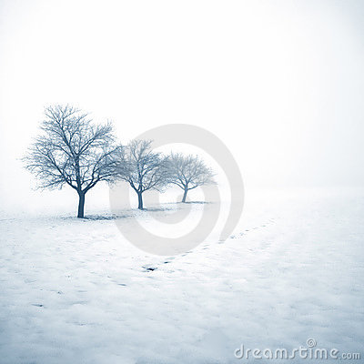 Free Frozen Trees In Snow Royalty Free Stock Photo - 18636065