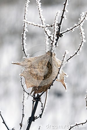 Free Frozen Twig Covered With Crystals Of Ice With A Dead Dry Leaf In Winter Royalty Free Stock Photography - 112896987