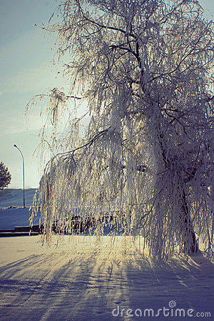 Frozen weeping willow