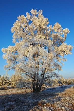 Free Frozen White Tree In The Morning Stock Photo - 140372560