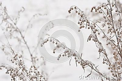 Frozen winter plant