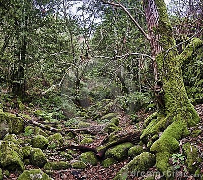Förtrollad skog