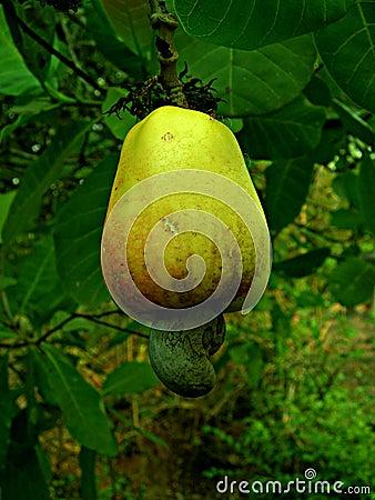 Fruit_02