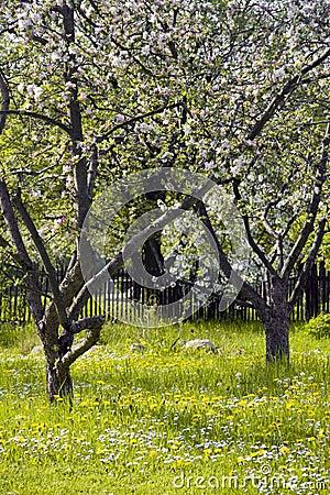 Free Fruit Garden Stock Photo - 6440890