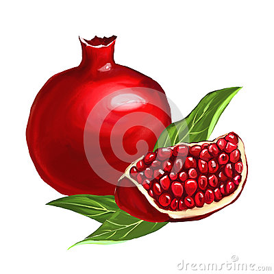 Free Fruit Pomegranate Vector Illustration  Hand Drawn Stock Images - 54227084