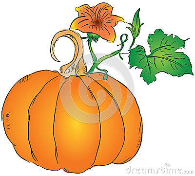Fruit of the pumpkin