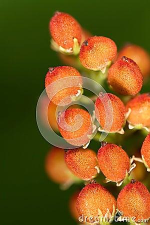 Fruits of Wild Flower