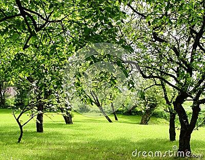 Fruktfruktträdgård