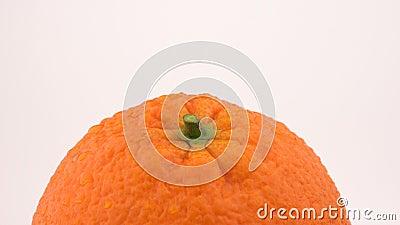 Fruta anaranjada que gira en la tabla de la vuelta Aislado en el fondo blanco Loopable Ciérrese encima de macro Visión superior p almacen de metraje de vídeo