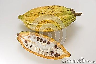 Fruta do cacau