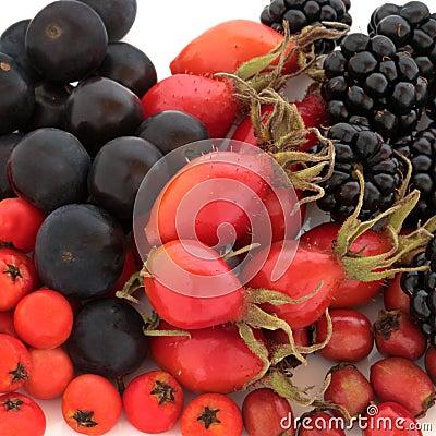 Fruta salvaje del otoño