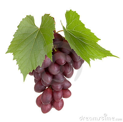 Frutas negras de la uva con las hojas