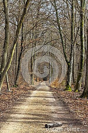 Fußweg in einem Wald