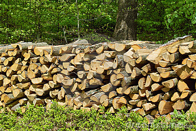 Pile of Fuel Wood for Fireplace in Forest.