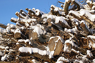 Fuelwood against Blue Sky in Winter