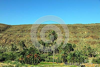 Fuerteventura island Canary islands Spain