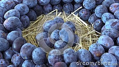 Fuits da variedade do Prunus da ameixa, árvore muito resistente, no mercado da cidade, no sabor muito suculento e na acidez natur video estoque