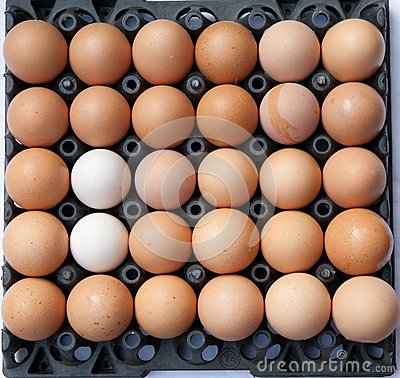 full eggs pack with different