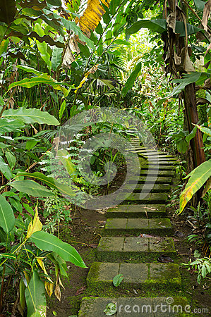 Tropical vegetation