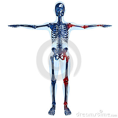 Full human glass skeleton 3D concept with joint pa