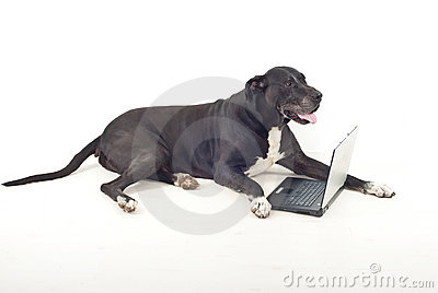 Full length of dog with laptop