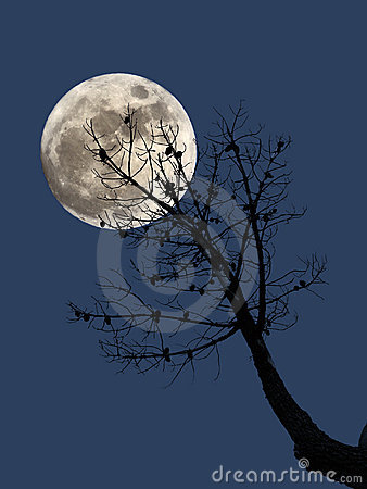 Full moon and dead pine