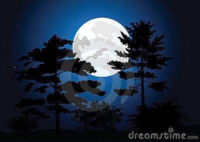 Full moon in a night forest