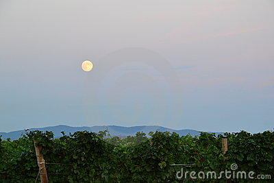 Full moon over vineyard