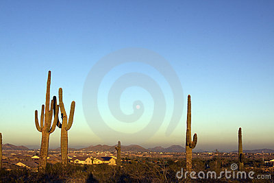 Full Moon and Saguaros