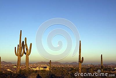 Full Moon and Saguaros