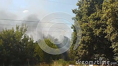 Fumée épaisse montant au-dessus de la forêt verte, menace des feux de forêt en été chaud, incendie criminel clips vidéos