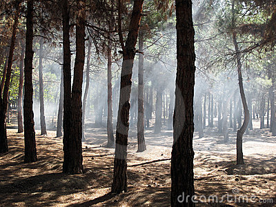 Fumée dans la forêt