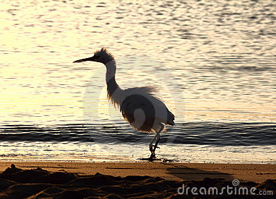 Fun disheveled heron bird