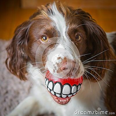 Free Fun Dog Dental Care Royalty Free Stock Image - 43645416