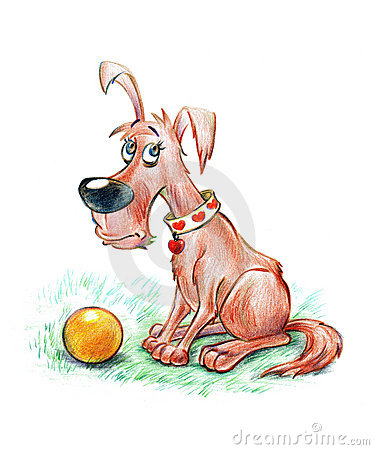 Fun dog in lovely collar