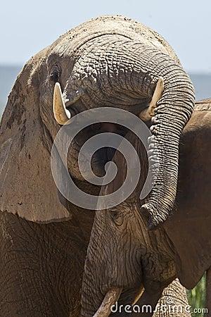 Fun loving Elephants
