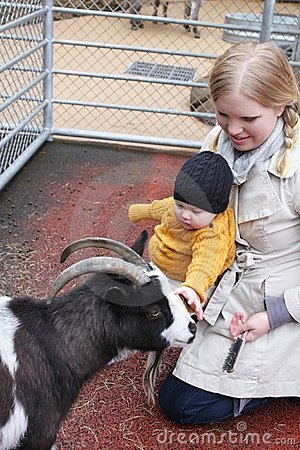 Fun At the Petting Zoo
