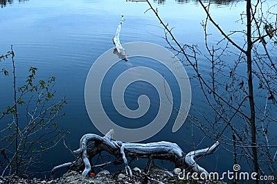 Log crocodile and log critter eating orange