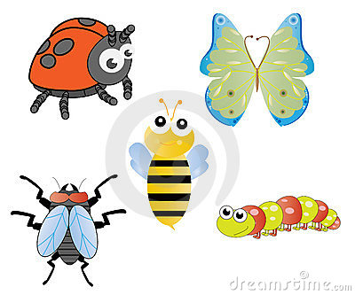 Fun and Silly Insects