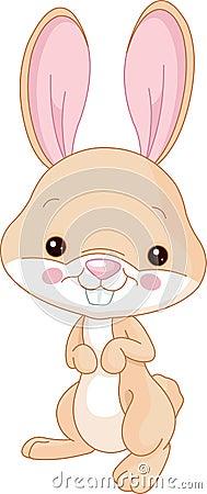 Fun zoo. Bunny
