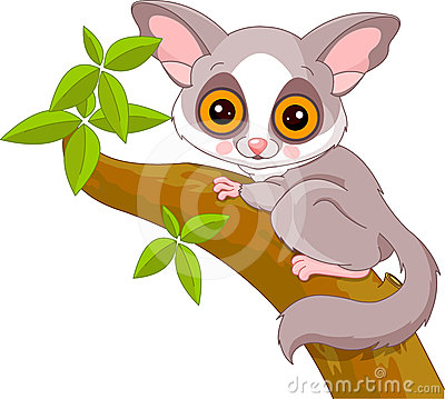 Fun zoo. Galago