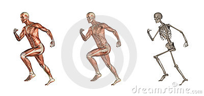 Funcionamiento masculino de la anatomía