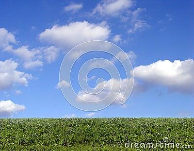 Fundo do céu e da grama