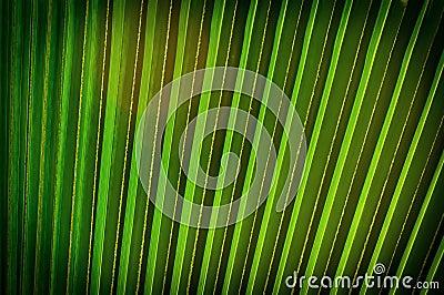 Fundo em folha de palmeira