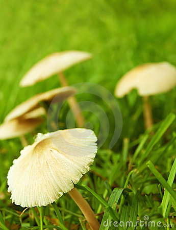 Funghi selvaggi