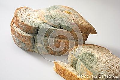 Fungus on bread